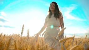 Dziewczyna chodzi wzdłuż pszenicznego pola natury zwolnionego tempa wideo Piękna dziewczyna w biel sukni natury działającej wolno zdjęcie wideo