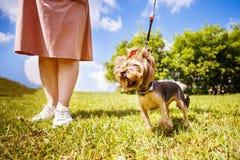 Dziewczyna chodzi z psem w parku obraz stock