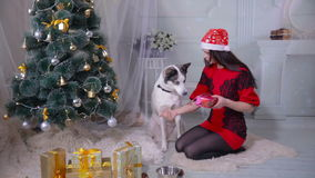 Dziewczyna daje prezentowi jej łuskowata psia pobliska choinka podczas nowego roku świętowania zbiory
