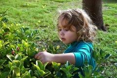 dziewczyna drzeje kwiaty od krzaków Obraz Stock
