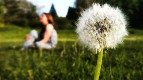 Dziewczyna i dandelion Zdjęcia Stock