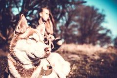 Dziewczyna i jej łuskowaty psi plenerowy w lesie Zdjęcia Royalty Free
