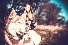 Dziewczyna i jej łuskowaty psi plenerowy w lesie Fotografia Stock