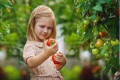 Dziewczyna i pomidorowy żniwo Obrazy Royalty Free