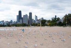 Dziewczyna i Seagulls Obraz Royalty Free