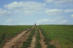 Dziewczyna jeździecki bicykl przy łąką Zdjęcie Stock
