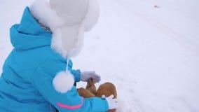 Dziewczyna karesy pies i szczeniak w zima mroźnym dniu Psy bawić się z ich mistrzem na śnieżnej drodze Zima pets zdjęcia royalty free