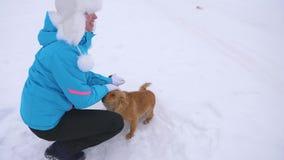 Dziewczyna karesy pies i szczeniak w zima mroźnym dniu Psy bawić się z ich mistrzem na śnieżnej drodze Zima pets zdjęcie stock
