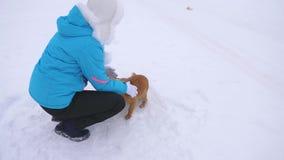 Dziewczyna karesy pies i szczeniak w zima mroźnym dniu Psy bawić się z ich mistrzem na śnieżnej drodze Zima pets obraz stock