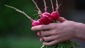 Dziewczyna, kobieta rolnik trzyma rzodkwi w jej ręce zbiory wideo