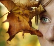 dziewczyna liść Zdjęcie Stock