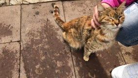 Dziewczyna migdali pomarańczowego kota wysokiego kąta ulicznego widok zdjęcie wideo