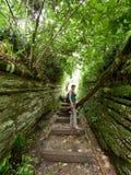 Dziewczyna na śladzie w zwartym zielonym tropikalnym lesie deszczowym obraz stock