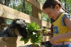Dziewczyna na gospodarstwie rolnym obraz stock