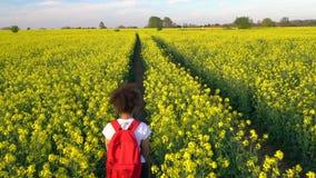 Dziewczyna nastolatka żeńska młoda kobieta wycieczkuje z czerwonym plecakiem i butelką woda w polu rapeseed żółci kwiaty zbiory wideo