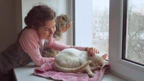 Dziewczyna nastoletni i zwierzęta domowe kot i psi przyglądający out okno, kotów sen zwierzę domowe Zdjęcia Stock