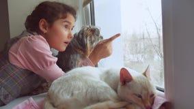 Dziewczyna nastoletni i zwierzęta domowe kot i psi przyglądający out okno kota zwierzę domowe śpi zbiory wideo