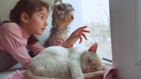 Dziewczyna nastoletni i zwierzęta domowe kot i psi przyglądający zwierzę domowe out okno kot śpi zbiory wideo