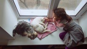 Dziewczyna nastoletnia, zwierzęta domowe koty i psa zwierzę domowe patrzeć out okno, kot śpimy zbiory wideo