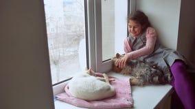 Dziewczyna nastoletnia, zwierzęta domowe koty i zwierzę domowe pies patrzeć out okno, kot śpimy zdjęcie wideo