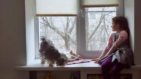 Dziewczyna nastoletnia, zwierzęta domowe koty i zwierzę domowe pies patrzeć out okno, kot śpimy Zdjęcia Stock