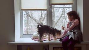 Dziewczyna nastoletnia, zwierzęta domowe koty i zwierzę domowe pies patrzeć out okno, kot śpimy Obrazy Royalty Free