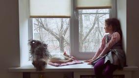 Dziewczyna nastoletnia, zwierzęta domowe koty i zwierzę domowe pies patrzeć out okno, kot śpimy Obrazy Stock