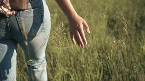 Dziewczyna podróżnik iść przez wysokiej trawy młoda kobieta podróżnik dotyka trawy i cieszy się podwyżkę swobodny ruch zbiory wideo