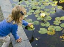 Dziewczyna próbuje podnoszący wodnej lelui kwiaty Zdjęcia Royalty Free