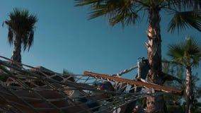 Dziewczyna relaksuje w hamaku blisko palm zbiory