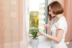 Dziewczyna rozpyla domowej rośliny Obrazy Stock