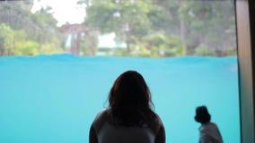Dziewczyna siedzi przez szkła i spojrzenia wodny przedstawienie z słoniami w basenie, zbiory wideo