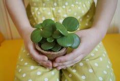Dziewczyna siedzi z sukulentem w ona ręki Zasadzać rośliny Wiosna Świąteczna wielkanoc fotografia stock