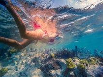 Dziewczyna snorkeling w pięknej laguny obfitości ryba Fotografia Royalty Free