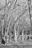 Dziewczyna stojak w deszczu lesie i suchej trawy polu obrazy stock