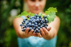 Dziewczyna trzyma świeżych soczystych dojrzałych winogrona obraz stock