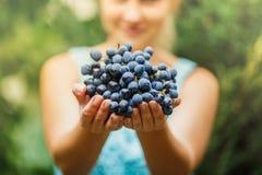 Dziewczyna trzyma świeżych soczystych dojrzałych winogrona zdjęcie royalty free