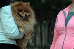 Dziewczyna trzyma czerwonego psa spitz traken w ona i opowiada kobieta w różowej kurtce w biel ubraniach ręki Lato pojęcia zwierz zdjęcia royalty free