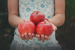 Dziewczyna trzyma czerwonych jabłka w rękach, garść przy półpostaci tłem Fotografia Royalty Free