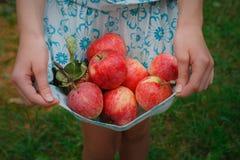 Dziewczyna trzyma jabłka w spódnicowym hemline Fotografia Stock