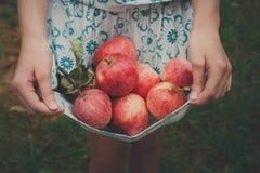 Dziewczyna trzyma jabłka w spódnicowym hemline Zdjęcia Royalty Free