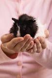 Dziewczyna trzyma jej królika doświadczalnego Obrazy Stock