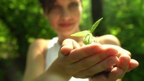 Dziewczyna trzyma out garść ziemia z małą zieloną rośliną zbiory wideo