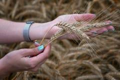 Dziewczyna trzyma pszenicznych ucho w jej ręce Zdjęcie Royalty Free