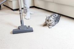 Dziewczyna vacuuming dom jaskrawa dywanu i światła leath kanapa obrazy stock