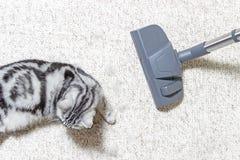 Dziewczyna w cajgach vacuuming dom E obrazy stock