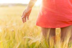 Dziewczyna w czerwieni sukni odprowadzeniu na pszenicznym polu Zdjęcia Stock