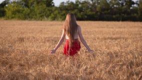 Dziewczyna w czerwonym spódnicowym odprowadzeniu na dojrzałym pszenicznym polu przy zmierzchem przeciw tłu zielony las zbiory wideo