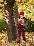 Dziewczyna w jesieni lasowy pozować, kolorów żółtych liściach i drzewach na tle, Obrazy Royalty Free