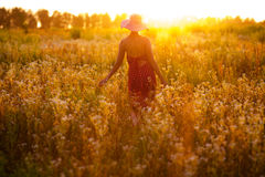 Dziewczyna wildflowers na lato wieczór Fotografia Royalty Free
